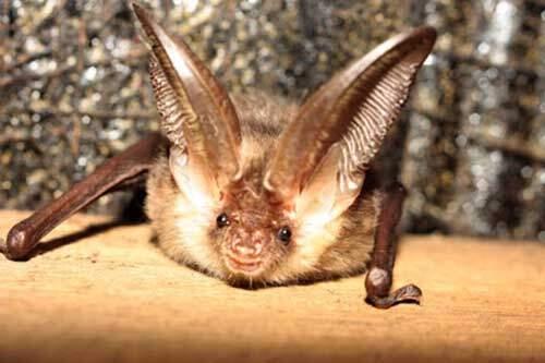 Bat Surveys Northampton