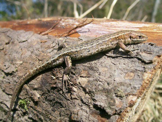 Earth environmental and geotechnical reptile surveys